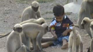 Karnataka Boy Finds a Friend in Monkeys; Watch Them Play in This Viral Video