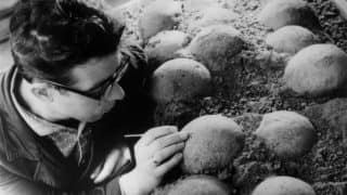 Dinosaur Eggs Around 130 Million-year-old Found Perfectly Preserved in China