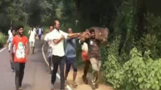 Ooty Forest Official Carries Injured Baby Elephant to its Mother; The Heartwarming Video Goes Viral