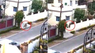Leopard Enters Residential Colony In Dehradun's Keval Vihar, Escapes After Hours Of Ruckus: Watch Video