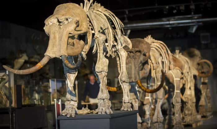 Mammoth skeleton sells for almost  €550000 at French auction