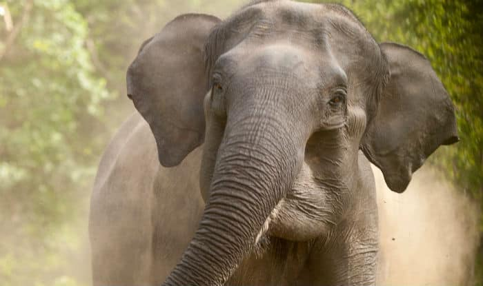 Speeding train in Assam mows down 6 elephants
