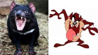 Man Sues Father-in-Law For Terrorizing Him With Warner Bros. Cartoon Character Taz, the Tasmanian Devil
