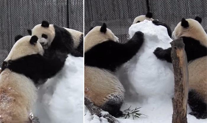 Image: YouTube/ Toronto Zoo