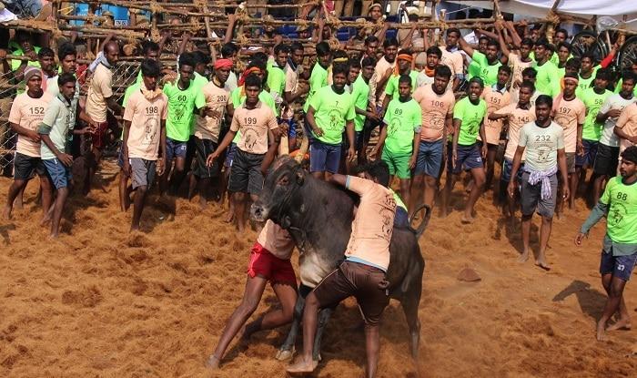 Jallikattu held in Madurai as part of Pongal festivities