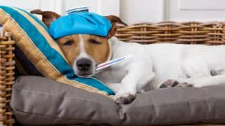 What is Canine Influenza: 5 Signs of Influenza to Lookout For in Your Pets