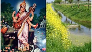 Basant Panchami 2018: Significance And Celebrations of the Festival That Marks Beginning of Spring Season