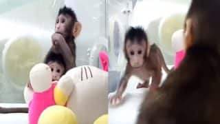 Two Chinese Monkeys Became World's First Cloned Primates, Born Using Dolly the Sheep Cloning Method