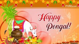 Happy Thai Pongal 2018: Best Pongal WhatsApp Messages, Facebook Wishes, Greetings And SMS to Celebrate the Tamil Harvest Festival