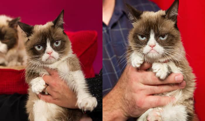 Grumpy Cat Wins $710K Ruling in Copyright Case