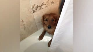 Dog Interrupts Owner's Shower for the Most Heartwarming Reason Ever