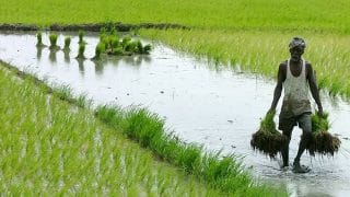 Government Set to Hike MSP For Paddy Crop by Rs 200/Quintal