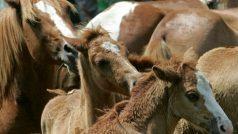 घोड़ों में ग्लैंडर्स रोग के चलते अदालत ने अगले आदेश तक घुड़दौड़ पर लगाई रोक