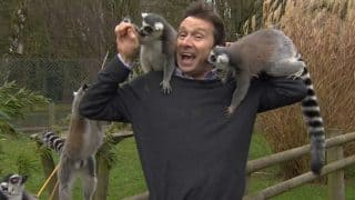 BBC Journalist Gets Interrupted by a Group of Lemurs While Reporting From a Zoo, Video Goes Viral