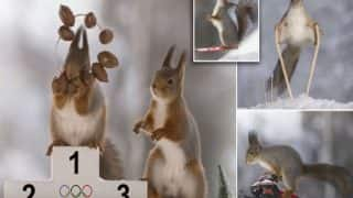 Wild Squirrels Captured Skiing and Riding Snowmobile Ahead of Winter Olympics 2018 in Pyeongchang County, South Korea