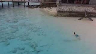 Boy Narrowly Escapes Sharks in Shallow Waters of Bahamas, Drone Video is Intense AF