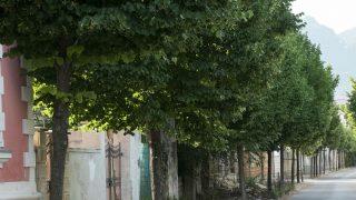 नहीं रहा 300 साल पुराना बरगद का पेड़, ग्रामीणों ने दी अनूठी विदाई