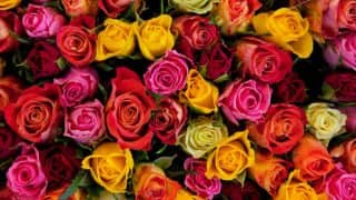 Valentine's Day 2018: Kolhapur to Export 12 Lakh Roses