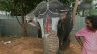 Elephant Plays Mouth Organ in Coimbatore, Adorable Video Becomes Viral