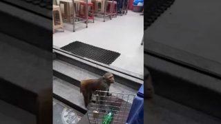 Monkey Drinks Alcohol and Creates Ruckus in Bengaluru Bar (Video)