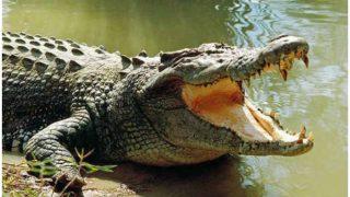 तालाब में नहा रहे थे दो दोस्त, तभी मगरमच्छ ने कर दिया हमला, फिर...