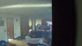 Dog Starts a Fire Accidentally After Switching on the Stove, Watch Video of Miraculous Escape