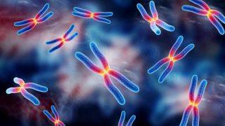नई रोबोटिक प्रणाली  के जरिये छोटे मानव अंगों का विकास !