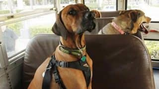 Karnataka Allows Pets to Travel as Passengers in Their State Transport Buses With Regular Fee