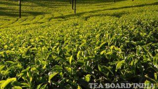 पाकिस्तान को सिर्फ 'पानी' ही नहीं पिलाता भारत, पिछले साल 'चाय' भी खूब पिलाई