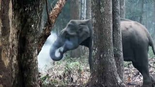 TRAGIC! Elephant Calf Electrocuted to Death in West Bengal's Jaldapara National Park