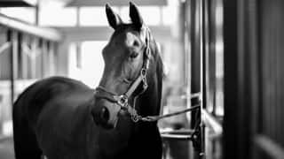 A Five-Star Resort for Horses: Qatar's Al Shaqab Has All Luxuries for Horses