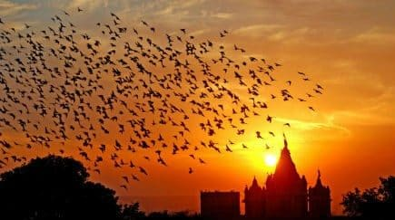 Photos of Bikaner: Beautiful Images of Rajasthan's Marvelous City Surrounded by The Thar Desert