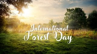 International Day Of Forests 2018: Know Why It Is Celebrated Every Year Globally