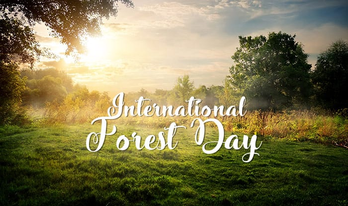 Forests and Sustainable Cities - International Forests Day