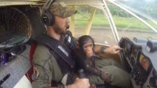 Adorable Video: Rescued Baby Chimpanzee Bonds with Pilot on Rescue Flight