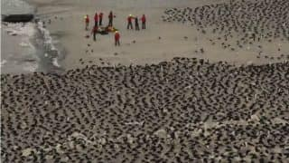 Supercolony of 1.5 Million Penguins Discovered on Antarctic Islands With the Help of Drones (Video)