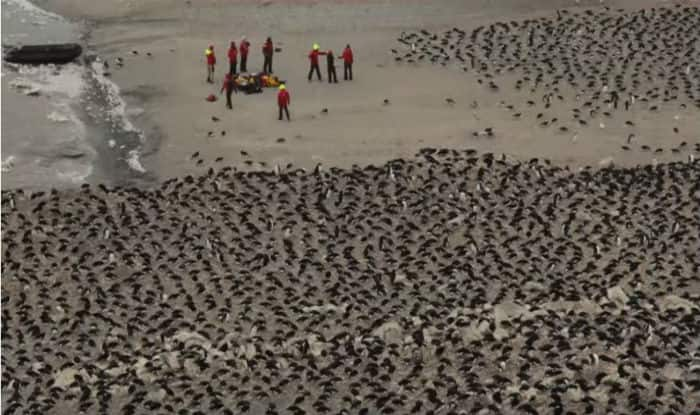 Drones spot supercolony of 1.5 million penguins in Antartica
