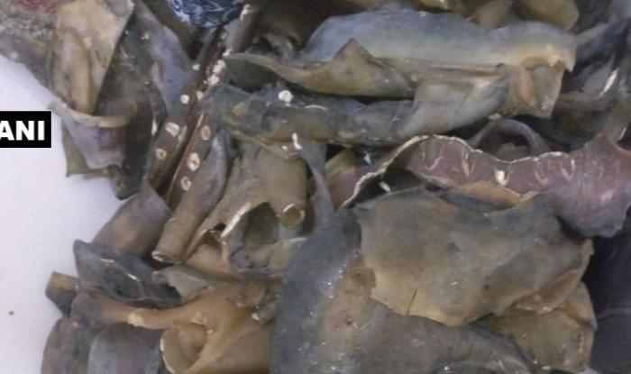 यूपी एसटीएफ ने कछुए की 27 किलो खाल बरामद की है. फोटो एएनआई