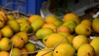 In India's Mango Capital - Malihabad, Farmers Have A New Worry