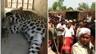 बहराइच: गांव में लोगों पर हमला कर फूस में घुस गया तेंदुआ, वन विभाग की टीम ने इस तरह पकड़ा