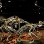 Skeletons of Dinosaurs on Sale in Paris Auction House This Week; Check it Out