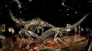 डायनासोर के 6.5 करोड़ साल पुराने जीवाश्मीकृत अंडे नाबालिग बच्चों ने चुराए, खतरे में दुर्लभ खजाना