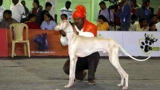 कर्नाटक चुनाव के बहाने सुर्खियों में आया 'मुधोल हाउंड', जानिए क्यों पीएम ने भी की इस कुत्ते की चर्चा