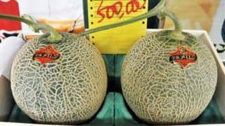 Pair of Premium Yubari Melons Fetched a Record of 3.2 Million Yen in Japan Auction