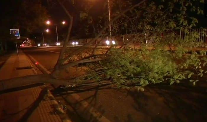 Tree falls in Delhi due to dust storm (ANI)