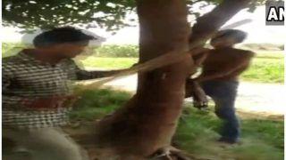 VIDEO: खेत से खरबूजा तोड़ने की तालिबानी सजा, किशोर को पेड़ से बांधकर बेरहमी से पीटा