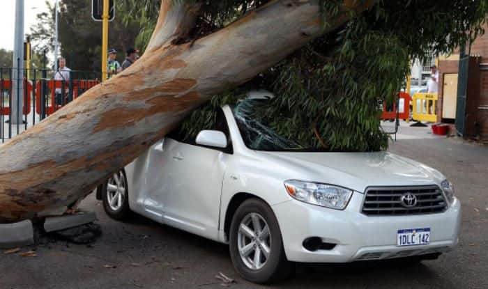 tree branch harm your vehicle