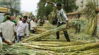 Sugarcane to Decide Which Side Votes go in Western Uttar Pradesh