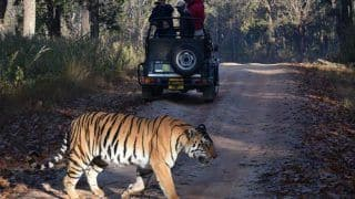 Experience The Best of Wildlife With These Summer Safari's in India