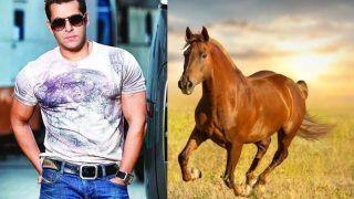 52 साल के सलमान खान ने घोड़े से लगाई रेस, उसके बाद दिखा ये हैरतअंगेज नजारा